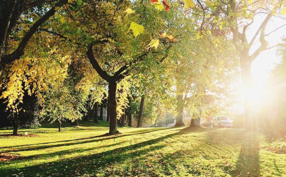 Najlepši beogradski parkovi koji čine dušu prestonice