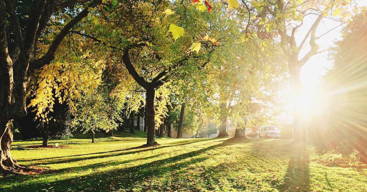 Drveće u parku