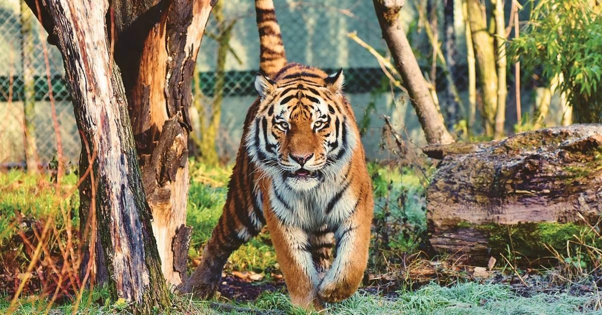 Zoološki vrt Beograd – atrakcija za turiste i Beograđane