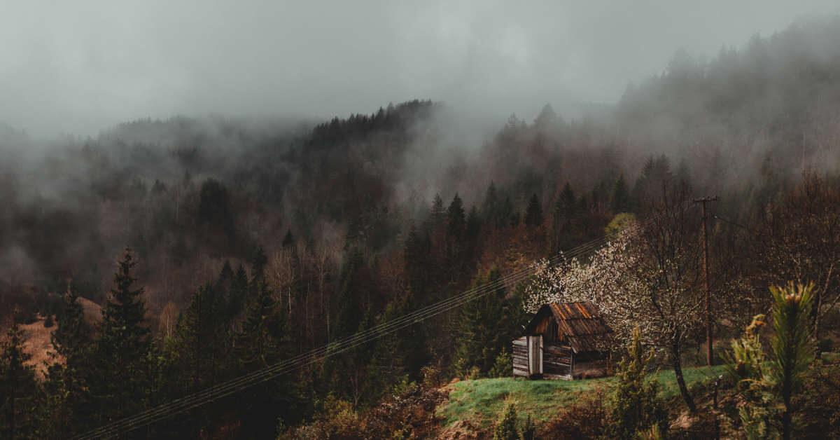 Brvnara na planini u gustoj i maglovitoj šumi