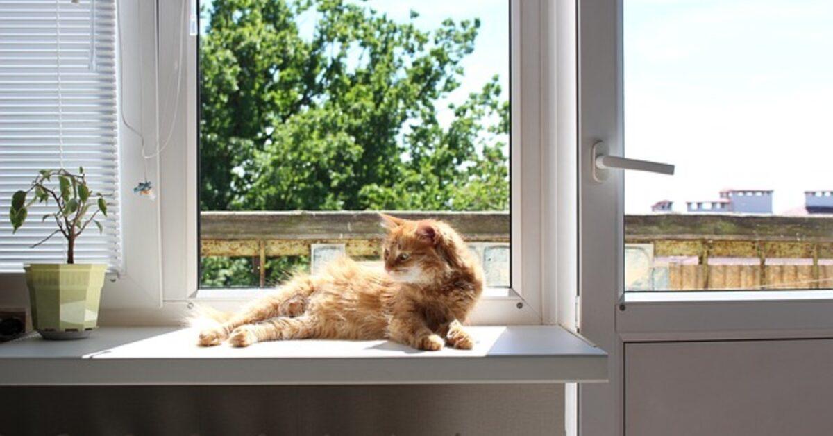 prikaz žute mačke koja leži na simsu prozora